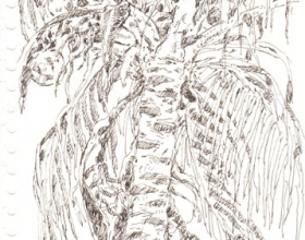 4-Chang Fee Ming. Coconut Tree in Redang, (2000) 17.5cm x 12.5cm. Pen on Paper