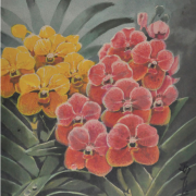 1-Venda Orchids, Undated RM 4,950.00-SOLD | Watercolour on paper | 35 x 25.5 cm