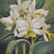 "4-RM 6,050.00-SOLD Khaw Sia ""Orchids"" Watercolour on paper (undated) 27cm x 23cm"