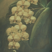 5-Orchids, Undated RM 3,850.00-SOLD | Watercolour on paper | 34 x 25 cm