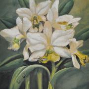 "4-RM 6,050.00-SOLD Khaw Sia ""Orchids"" Watercolour on paper (undated) 27cm x 23cm"