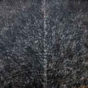 12-Siri Pohon Beringin-Daerah RM 2,464.00-SOLD| Acrylic on canvas| 100 x 100 cm